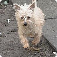 Adopt A Pet :: Howie - Tumwater, WA