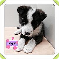 Adopt A Pet :: Tegan - Saskatoon, SK