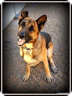German Shepherd Dog Mix Dog for adoption in Phoenix, Arizona - Oscar
