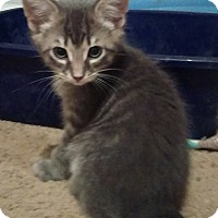 Adopt A Pet :: Marko - Edmonton, AB