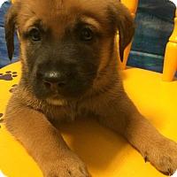 Adopt A Pet :: Fergie#7F - Orlando, FL