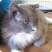 Adopt A Pet :: Westmoreland - Broomall, PA