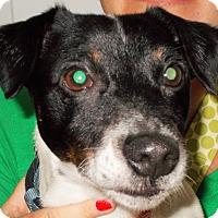 Adopt A Pet :: Duke - Plain City, OH