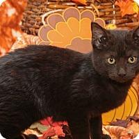 Adopt A Pet :: Long Black Jack - Bedford, TX