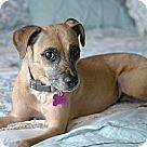 Adopt A Pet :: Soshi