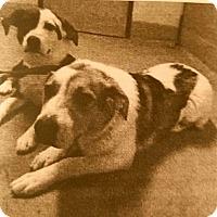 Adopt A Pet :: BREE - Gustine, CA