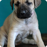 Adopt A Pet :: Camille - Waldorf, MD
