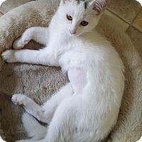 Adopt A Pet :: Lois - Flushing, MI