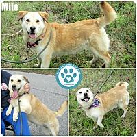Adopt A Pet :: Milo - Kimberton, PA