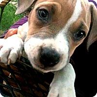 Adopt A Pet :: Delmonico-Adopted! - Detroit, MI