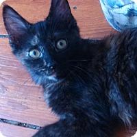 Adopt A Pet :: Keilani - Darby, PA