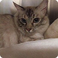 Adopt A Pet :: Stormy - Mission Viejo, CA