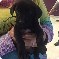 Adopt A Pet :: Julia - Maple Grove, MN