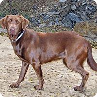 Adopt A Pet :: Fiona - Ruidoso, NM
