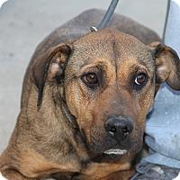 Adopt A Pet :: Roe - Greensboro, NC