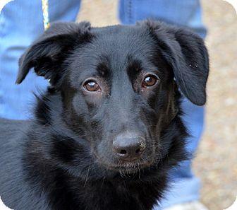 German Shepherd Dog Mix Dog for adoption in Palmyra, Pennsylvania - Katrina
