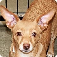 Adopt A Pet :: Anastasia - San Marcos, CA
