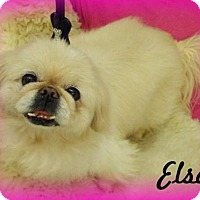 Adopt A Pet :: Elsa - Anaheim Hills, CA