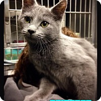 Adopt A Pet :: Raindrop - Hartford City, IN