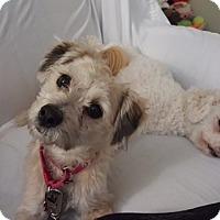 Adopt A Pet :: Benji - Cleveland, OH
