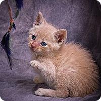 Adopt A Pet :: CID - Anna, IL