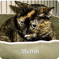 Adopt A Pet :: Muffin - Medway, MA