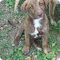 Adopt A Pet :: Victor - Adamsville, TN