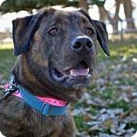 Adopt A Pet :: Belle* (Gazelle) - Cheyenne, WY