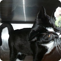 Adopt A Pet :: Mosely - Colmar, PA