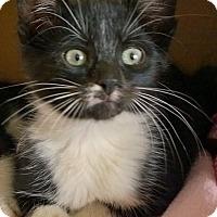Adopt A Pet :: Angelo - Island Park, NY