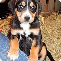 Adopt A Pet :: *Chanse - PENDING - Westport, CT