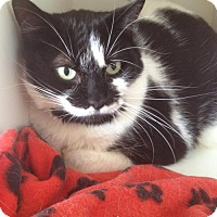 Adopt A Pet :: Orbit - Caistor Centre, ON