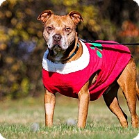 Adopt A Pet :: Chief - Shrewsbury, NJ