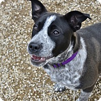 Adopt A Pet :: Cassidy - Meridian, ID