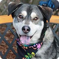 Adopt A Pet :: Hobbs - Garfield Heights, OH
