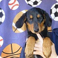 Adopt A Pet :: Penne - Oviedo, FL