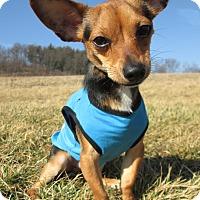 Adopt A Pet :: RIDLEY - New Cumberland, WV