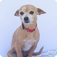 Adopt A Pet :: Dolly - Loomis, CA
