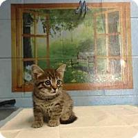 Adopt A Pet :: A492945 - San Bernardino, CA