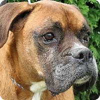 Adopt A Pet :: Max - Germantown, MD