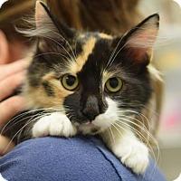 Adopt A Pet :: Lindsey - DFW Metroplex, TX