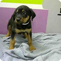 Adopt A Pet :: A1418343 - Houston, TX