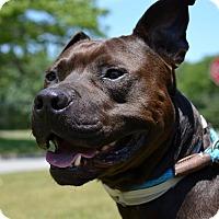 Terrier (Unknown Type, Medium) Mix Dog for adoption in Brookhaven, New York - Tyson B
