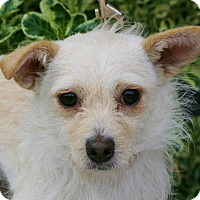Adopt A Pet :: Trixie - Carlsbad, CA