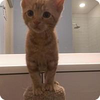 Adopt A Pet :: 3716 Zeus - LH - Council Bluffs, IA