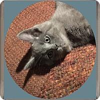 Adopt A Pet :: Sidney - Mt. Prospect, IL