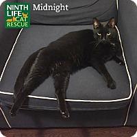 Adopt A Pet :: Midnight - Oakville, ON