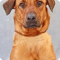 Adopt A Pet :: Angelica - Encinitas, CA