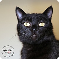 Adopt A Pet :: Midnight - Lyons, NY