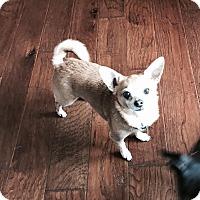 Adopt A Pet :: Skeeter - Dallas, TX